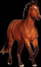 Verkaufspferd
