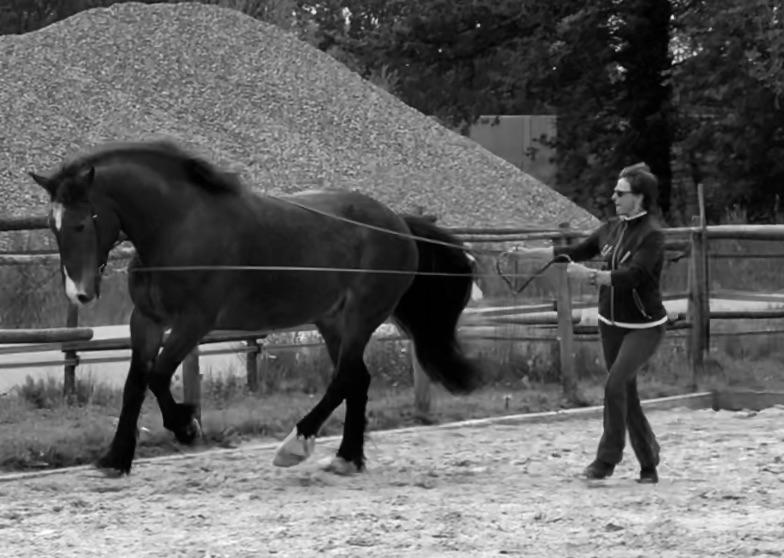Pferdegerechte Ausbildung für Pferd und Reiter